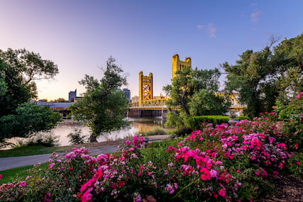 bridge in Sacramento with flowers in the foreground